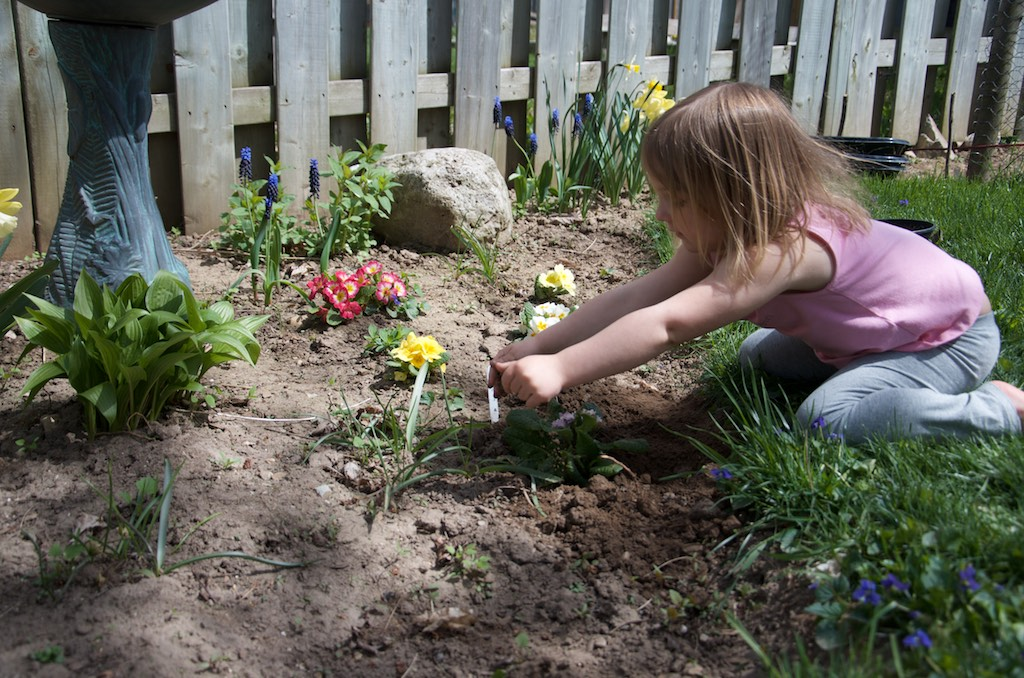 Girl in the garden planting primulas